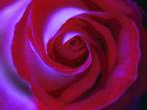 Flower Power -  Events Verbania - Art exhibitions Verbania