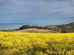 Riserva naturale del Borsacchio -  Events Roseto degli Abruzzi - Attractions Roseto degli Abruzzi