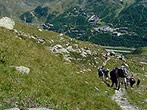 Excursion in the Cervino valley -  Events Chamois - Shows Chamois