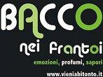 Bacco nei frantoi -  Events Bitonto - Shows Bitonto