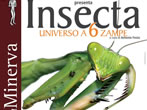Insecta -  Events Salerno - Art exhibitions Salerno