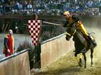 Bear joust -  Events Pistoia - Shows Pistoia