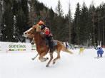 Skikjoring -  Events Selva Gardena - Sport Selva Gardena