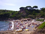 Reale beach -  Events Elba island - Attractions Elba island