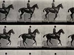 Eadweard Muybridge -  Events Milan - Art exhibitions Milan
