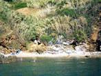 Gennaro Marina -  Events Elba island - Attractions Elba island