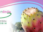 Prickly pear Fest -  Events Santa Margherita Belice - Shows Santa Margherita Belice