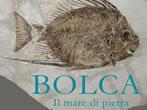 Bolca. Il mare di pietra -  Events Fratta Polesine - Art exhibitions Fratta Polesine