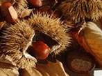 Chestnut festival -  Events Roncegno Terme - Shows Roncegno Terme